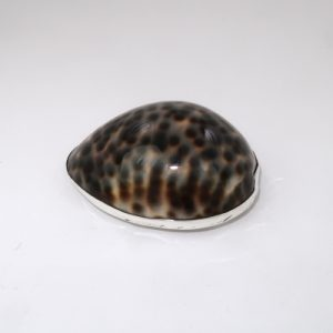 Cowrie shell topped silver box